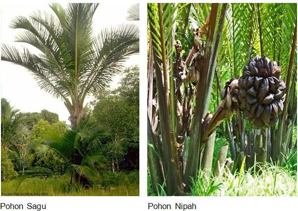 tanaman yang terdapat di dataran rendah Papua dan sekitarnya
