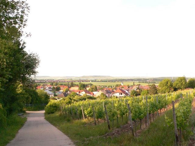 Camping Urlaub Landvergnügen Weingut Alte Schmiede  Siefersheim Weinberg Aussicht Panorma