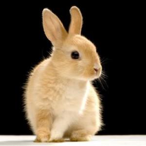 Tips Supaya Kelinci Tidak Terkena Scabies/Kurap