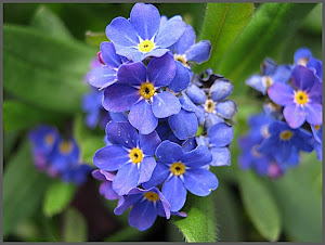 Niezapominajki to są kwiatki z bajki. I tak mówią do mnie - nie zapomnij o mnie:))