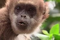 monkey mascot 2016 olympics