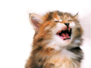 Cute Funny Kitten