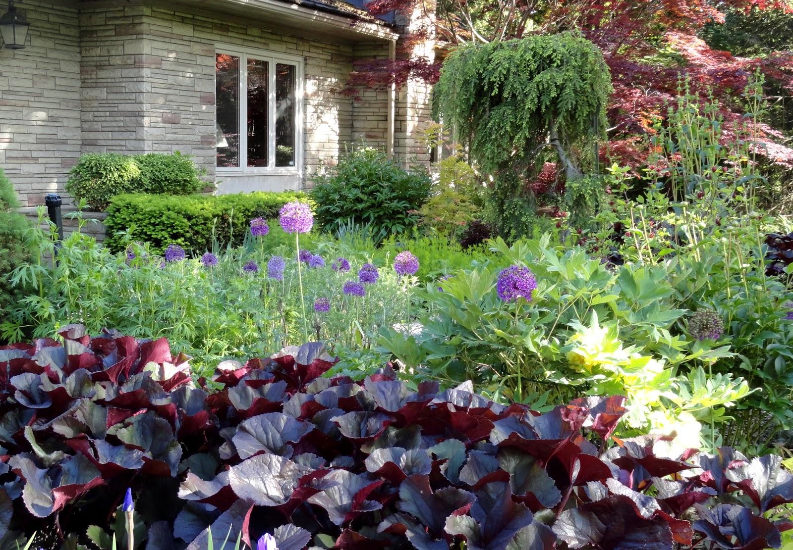Цветы в саду фото с описанием и