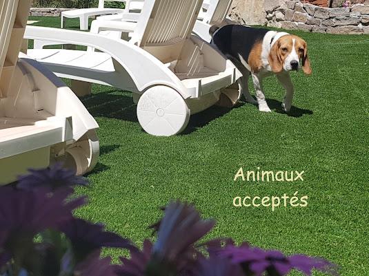 Villa olivier - Animaux acceptés
