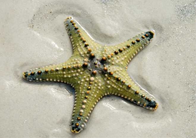 how to draw a perfect starfish