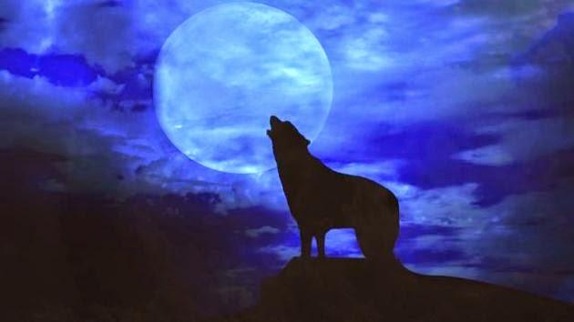 ¿Influye la luna llena en los animales?