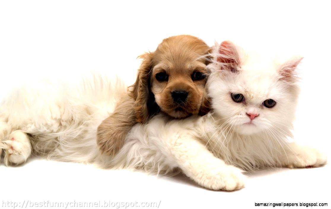 Cute Puppy Kiss Gif | Amazing Wallpapers