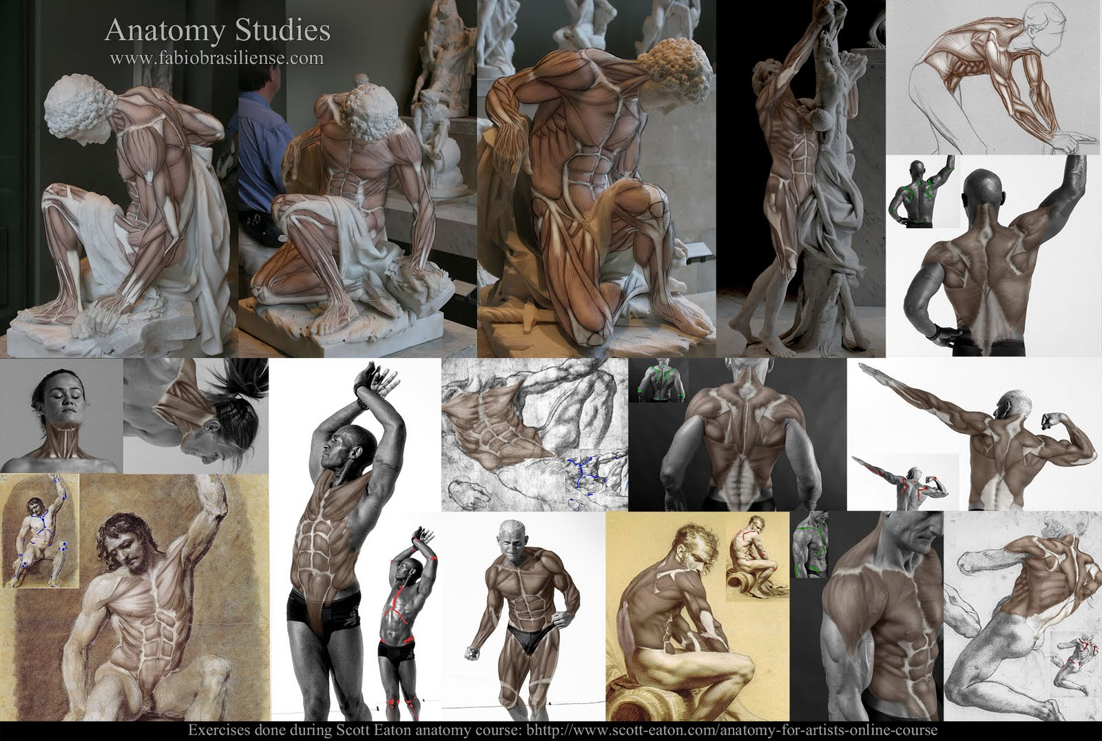 Awesome Online Anatomy Courses Ornament - Human Anatomy Images ...