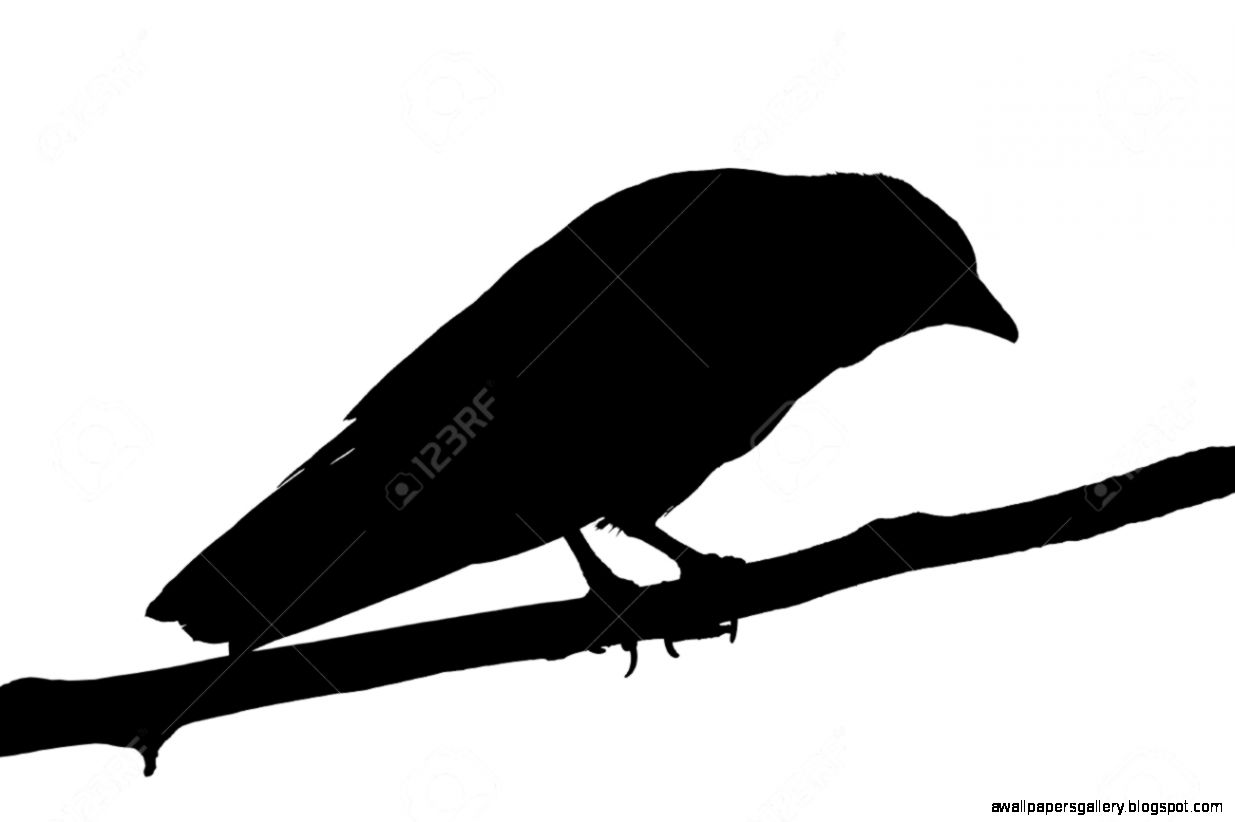 Crow On Branch Silhouette   Wallpapers Gallery