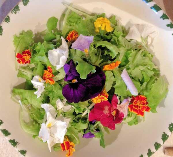 Voglio il mondo a colori dalla yucca allo chayote for Fiori edibili