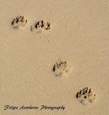 Fotografias vencedoras na categoria AS MINHAS FÉRIAS - Setembro 2011