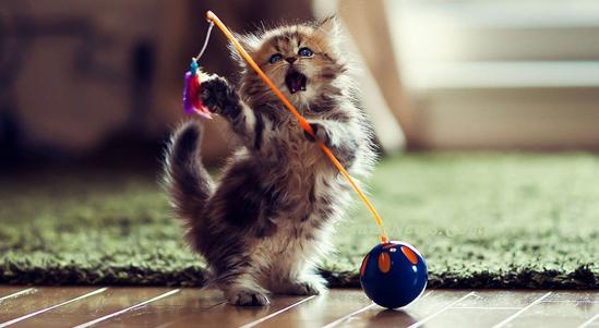 Fakta Unik Tentang Hewan Kucing