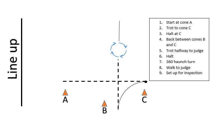 4H intermediate showmanship pattern