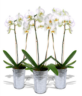 Unique Orchids Idea