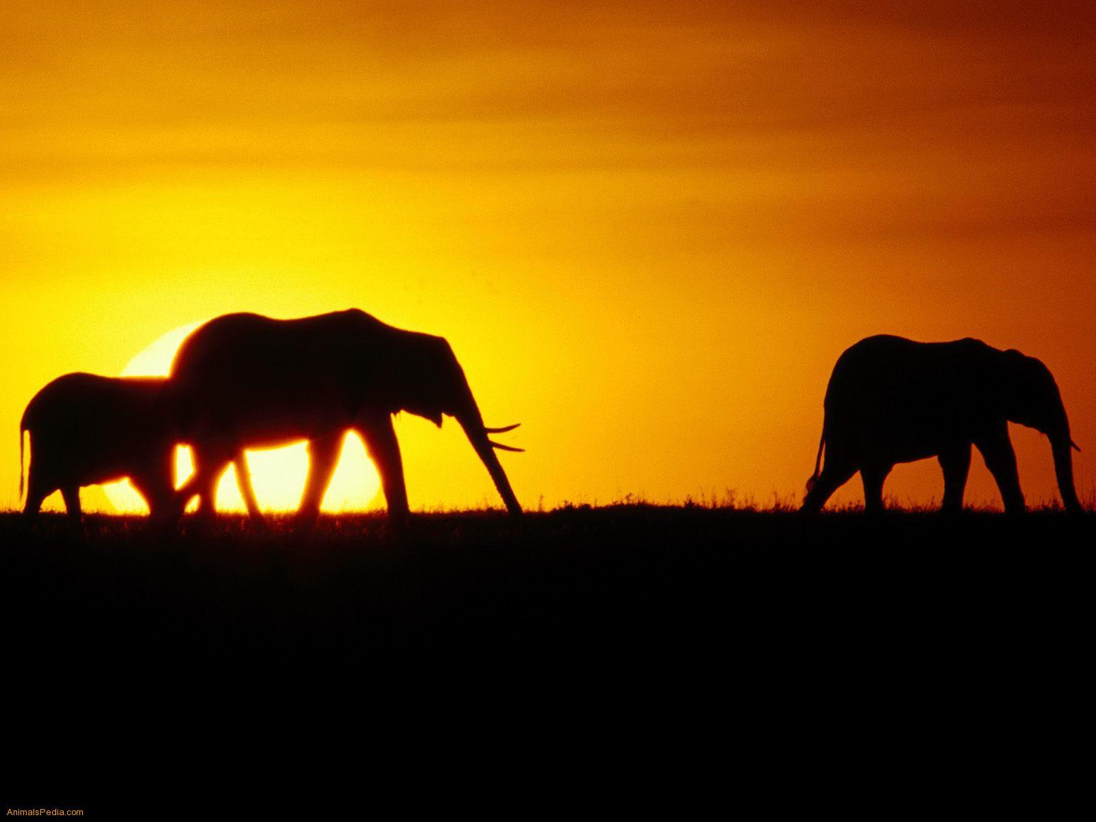 imagenes de habitat de animales - Animales y su Habitat Banco Fotográfico