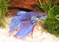 Ciekawe rybki akwaryjne jakie można hodować