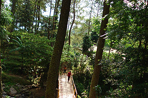 Pemandangan_dunia_hutan_Grojogan_sewu