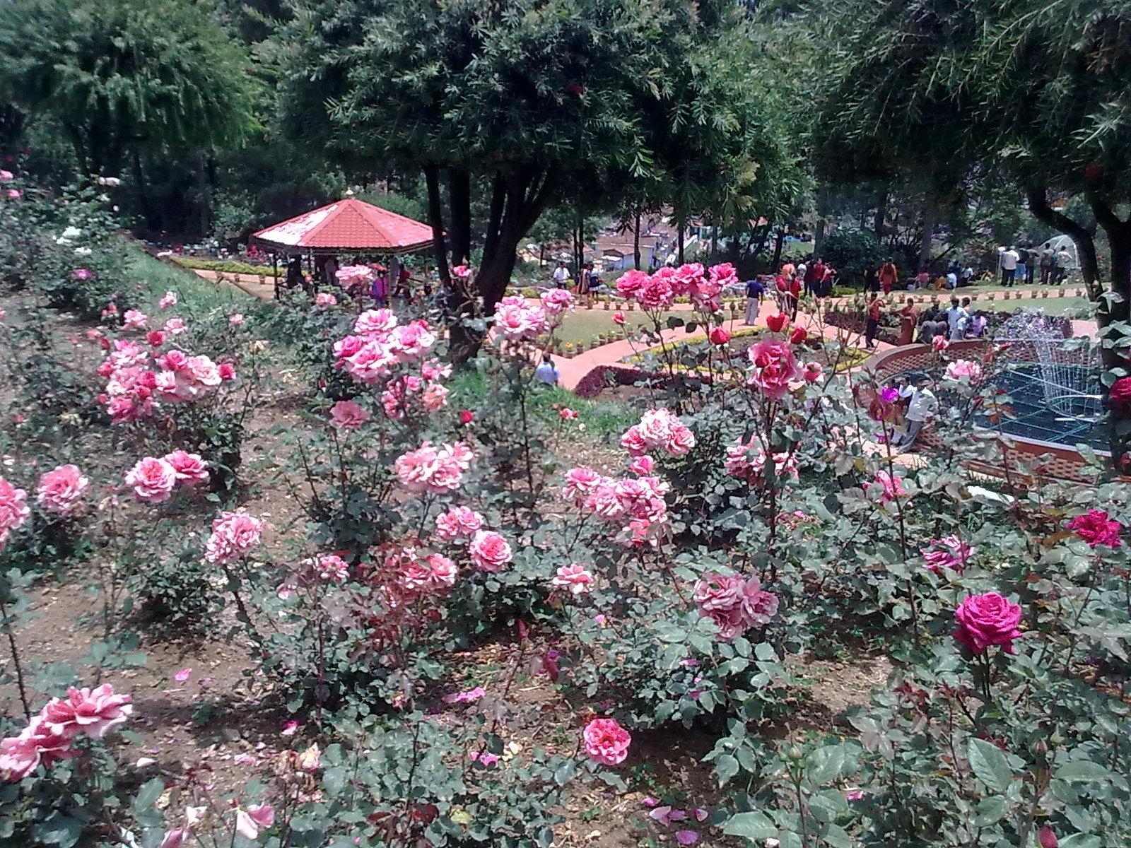 Garden Care Simplified The Beautiful Rose Garden In Ooty