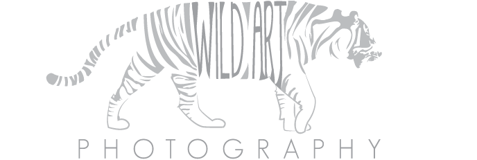 Wild Art Photography