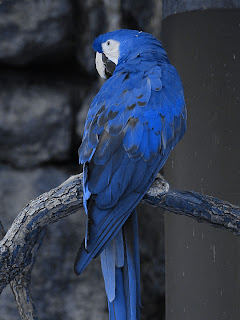 Macaw + Blue 416cbc; Mode Hue; Opacity 100%
