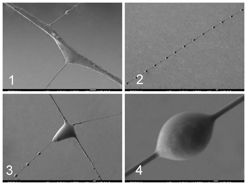 паутина в микроскоп