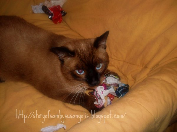 Can My Fiv Positive Cats Live With Dogs