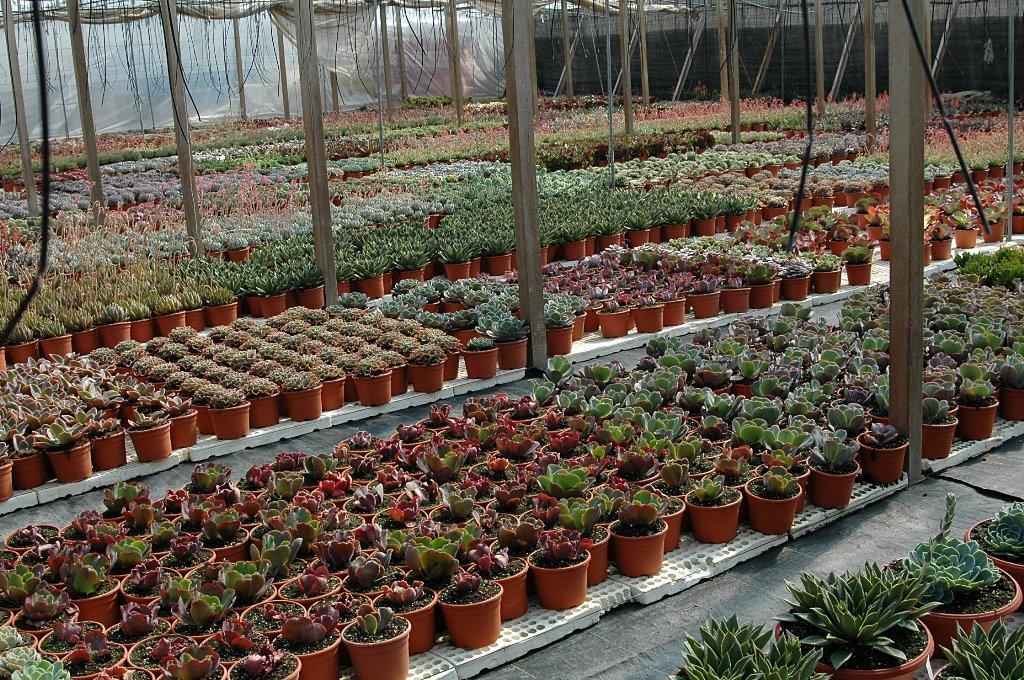 Floraciones en m laga y m s kedada del foro de cactus y for Plantas de vivero