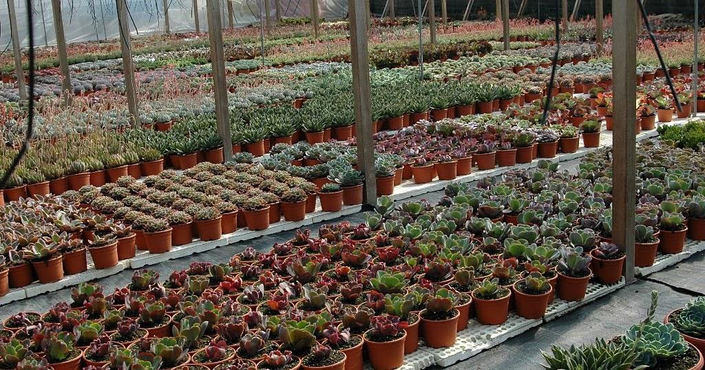 Floraciones en m laga y m s kedada del foro de cactus y for Vivero de cactus