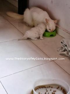 ibu dan anak kucing