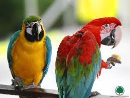Parrots picture