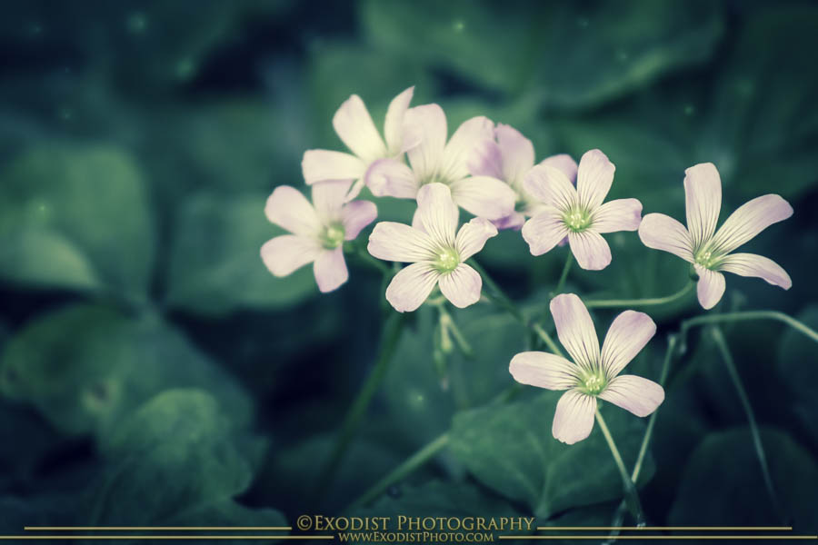 Pixie Dust © 2015 Exodist Photography, All Rights Reserved