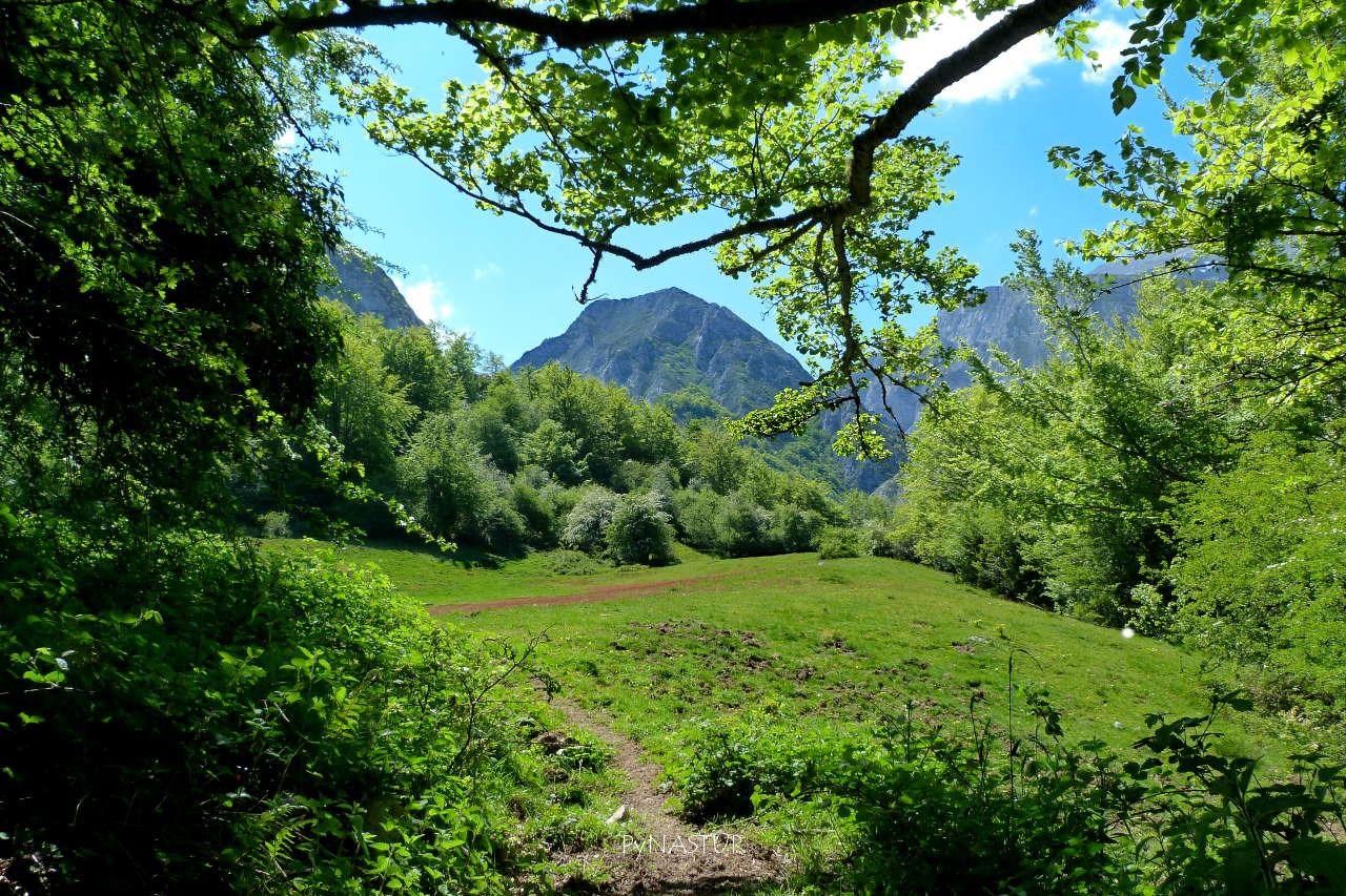 Prao en el Gobizal de La Foix  con Pena Arpín  - Bosque de Lindes - Quirós