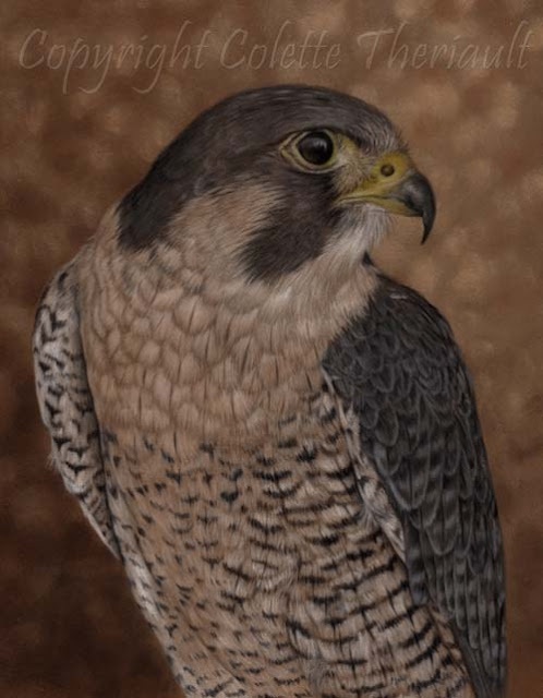 Peregrine Falcon Painting in Pastel by Award Winning Animal Artist Colette Theriault
