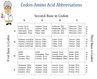 Amy Brown Science: New FREE Item: Chart of Amino Acids and ...