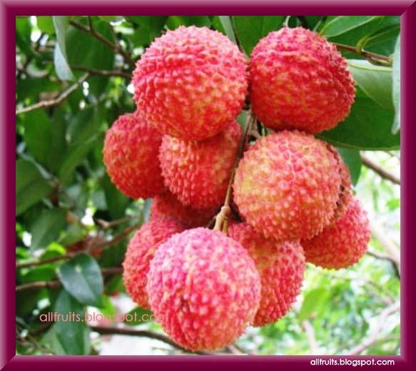 Lychee Tree Flower The...