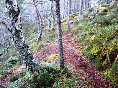 Path doubles back on Craigendarroch, a Deeside walk