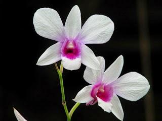 http://manfaatnyasehat.blogspot.com/2014/10/17-manfaat-bunga-melati-untuk-kesehatan.html