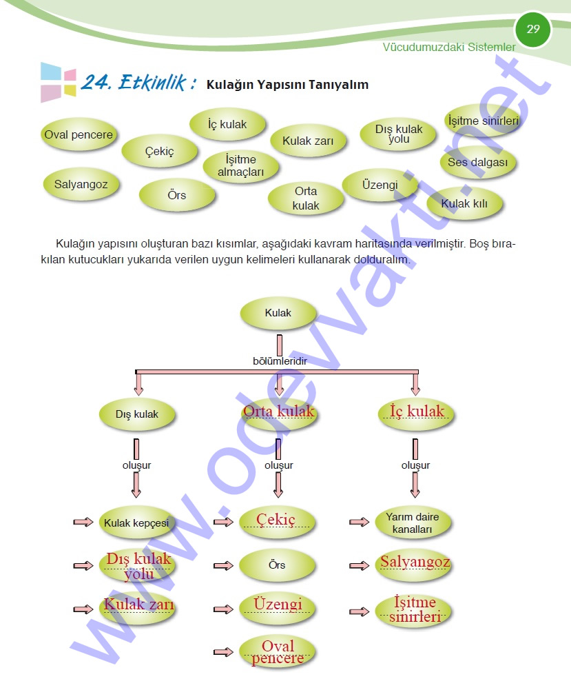 Sinif fen ve teknoloji çalişma kitabi cevaplari sayfa 29 meb