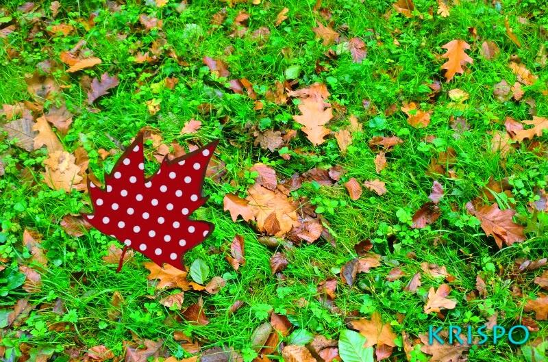 fotomontaje de hoja con lunares encima de hierba