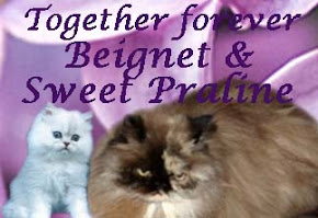 Remembering Sweet Praline and Beignet