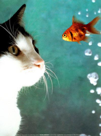 Semplicemente felice il mio amico gatto for Quanto vive un pesce rosso