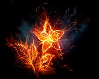Wallpaper Keren Bunga Api 2