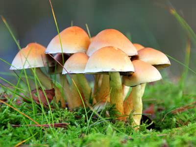 But Most Types Can Be Seen With The Unaided Eye. Some Of The Most Common  Fungi Include Mildews, Molds, Mushrooms, And Plant Rusts.
