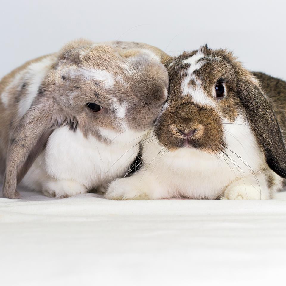koppel konijnen