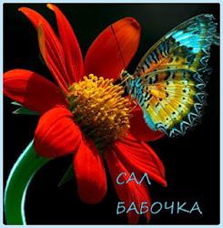 САЛ БАБОЧКА
