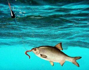 восточный ветер для рыбалки хорошо или плохо