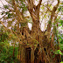 Old Enchanted Balete Tree | Siquijor - The Island of Fire