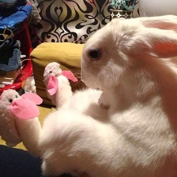 Funny animals of the week - 17 January 2014 (40 pics), bunny wears bunny slippers