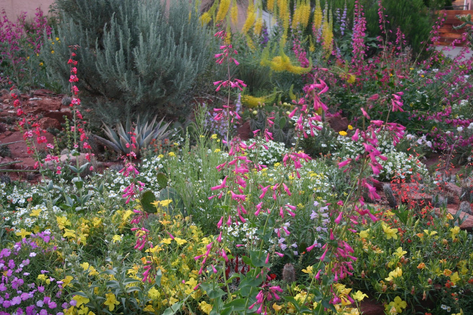 Co horts free xeriscape garden tour in pueblo for Garden design xeriscape