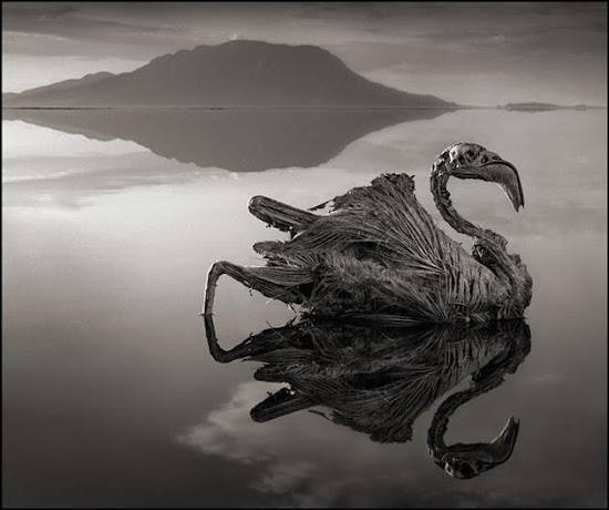 The terrifying Lake that turns animals into Stone